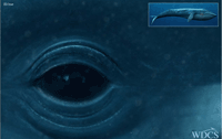 WDCS - Screenshot