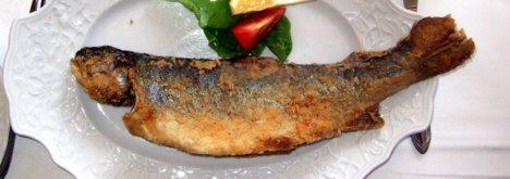 Toter Fisch